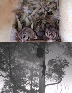 nest-boxes-2