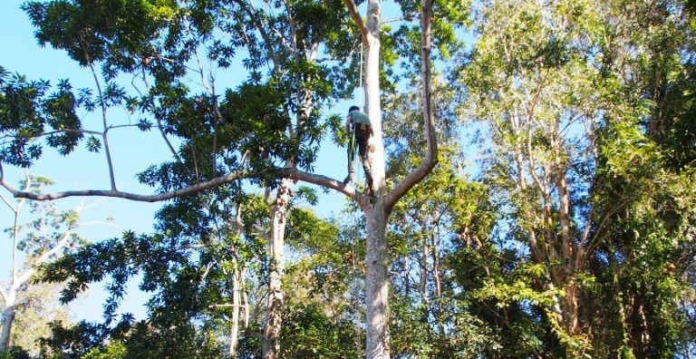 Installing the owl box - Brunswick Valley Landcare