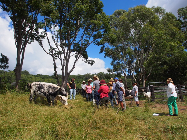 cattle bread workshop 2015 credit A Ratcliffe